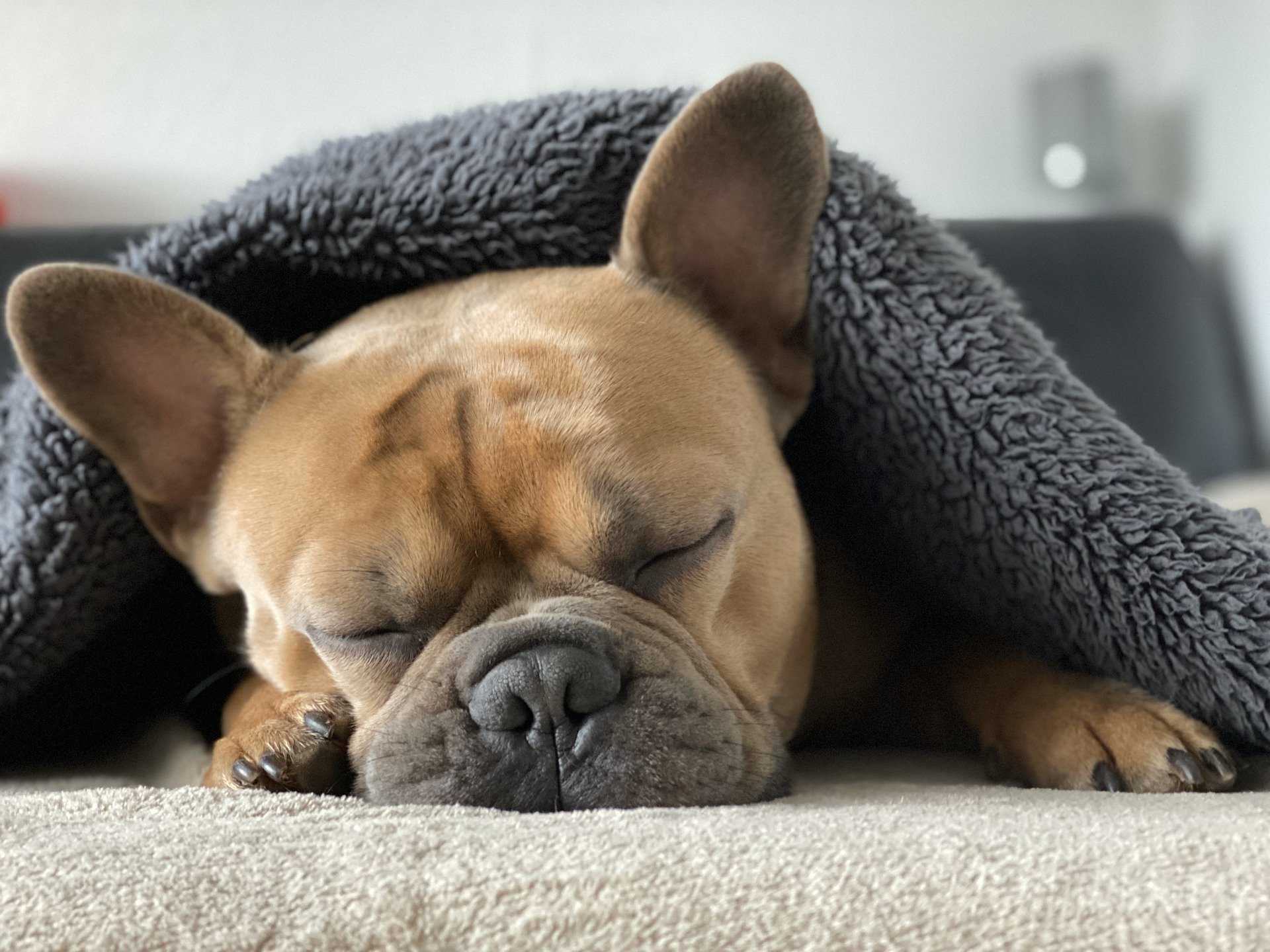 How to Make A Dog Sleep
