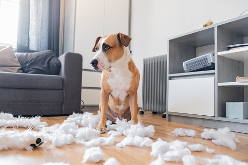 How to stop dogs chewing