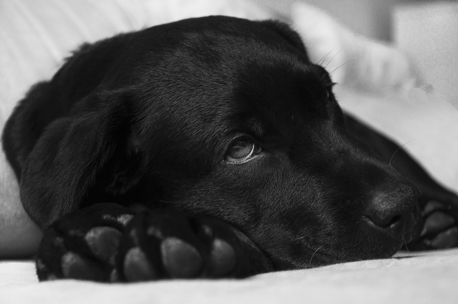 5 Foods That are Bad for Your Dog