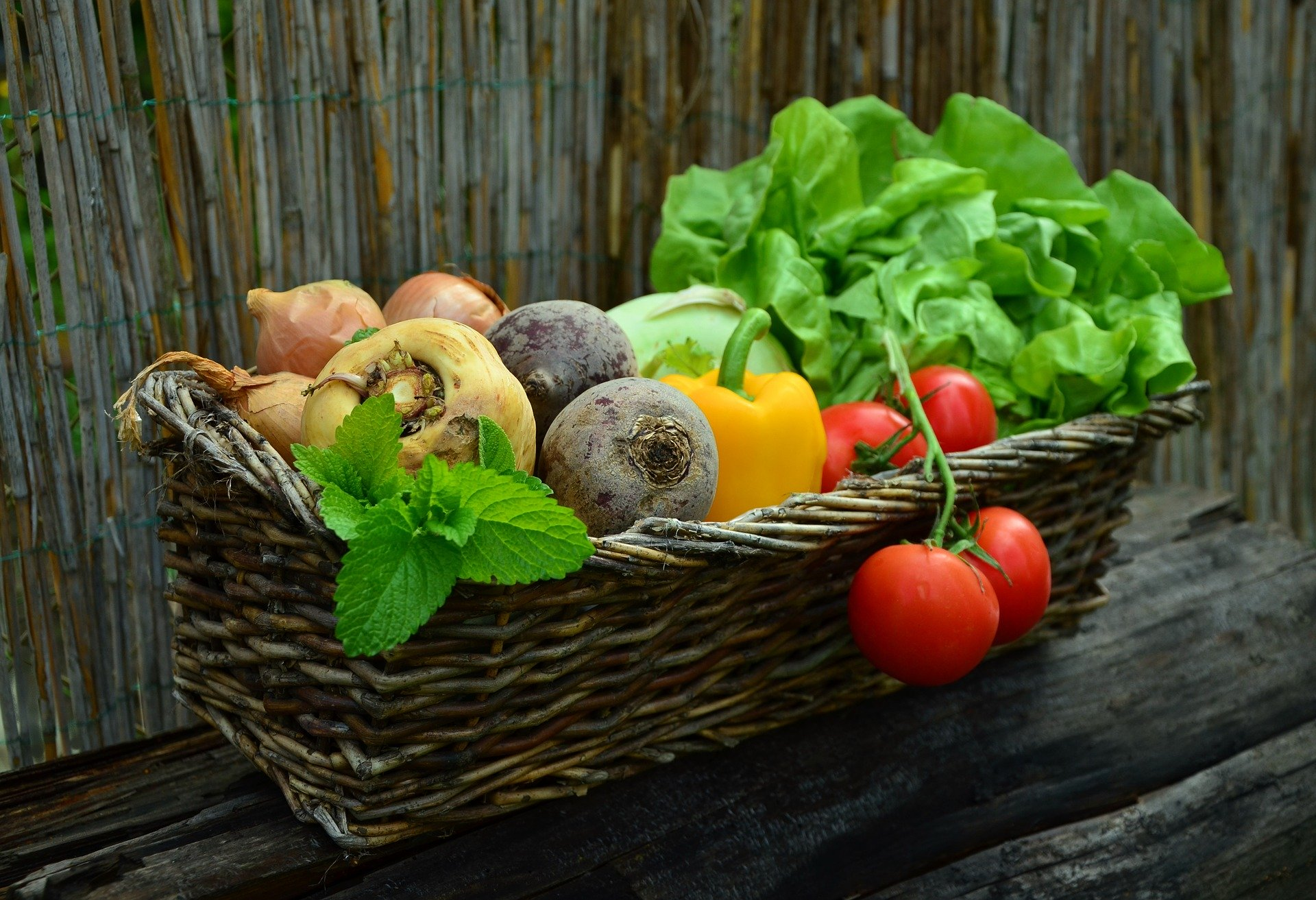 Can Dogs Eat Fruits and Vegetables?